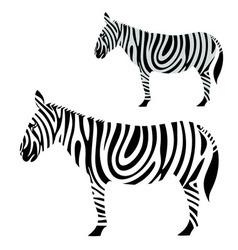 Zebra vector image