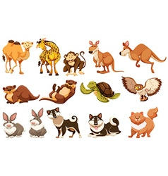 Set of different types of animals vector image