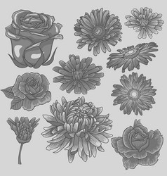 gray flower set isolated monochrome flowers vector image