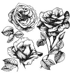 Set of handdrawn roses vector image