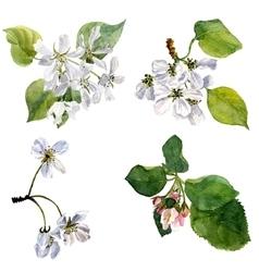 Watercolor apple tree flowers vector