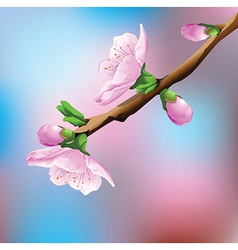 Flower on branch vector image