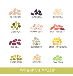 Beans and legumes set vector