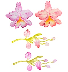 Watercolor hand drawn orchids vector