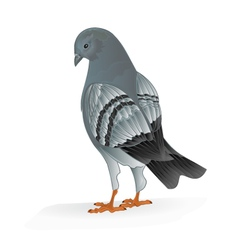 Bird carrier pigeon domestic sports bird vector