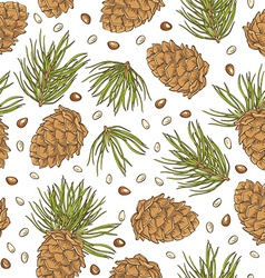 Hand drawing pine cones and pine nuts on white vector