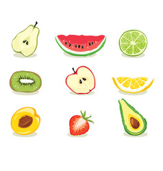fruit slices vector image vector image