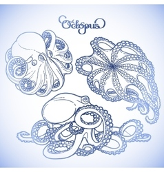 Graphic octopus collection vector