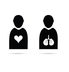 heart and lungs in man icon vector image vector image
