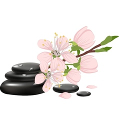 Spa background with cherry blossoms vector