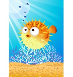 puffer fish vector image
