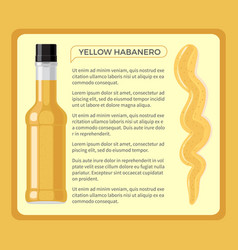 Yellow habanero spicy sauce in transparent bottle vector