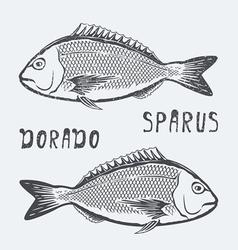 Dorado sparus fish vector image vector image