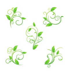 Set green floral elements with eco leaves isolated vector image vector image