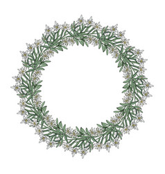Summer wreath with edelweiss flowers vector
