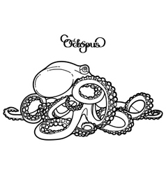 Graphic octopus vector image