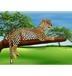 A leopard lying above the branch of a tree vector