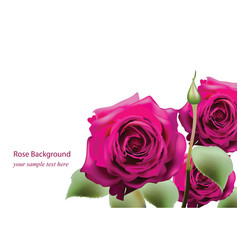 Realistic pink roses bouquet beautiful flowers vector