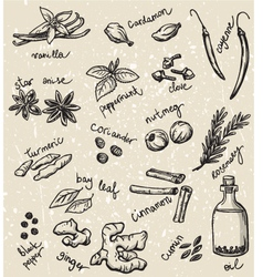 Set of spices and herbs vector