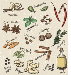 Spice and herbs vector