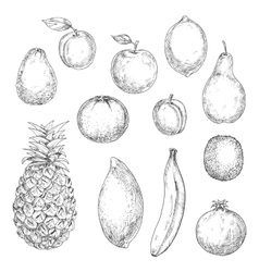 Tropical and garden fruits sketches vector image