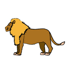 Big lion african proud powerful nobility standing vector