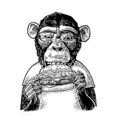 monkey wearing a t-shirt eating a hamburger burger vector image
