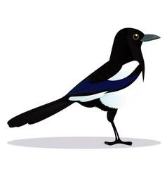 Magpie bird vector