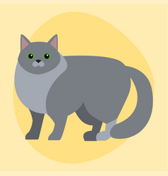 Cat breed siberian cute pet portrait fluffy gray vector