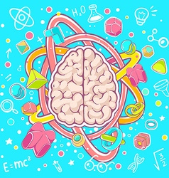 colorful of model of human brain on blue bac vector image