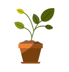Colorful silhouette of plant in flower pot with vector