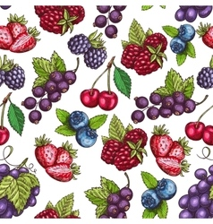 Berries fruits sketch seamless pattern vector