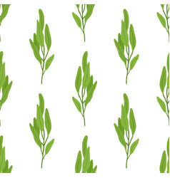 Sage salvia herb seamless pattern vector