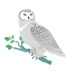 Snowy Owl Flat Design vector image