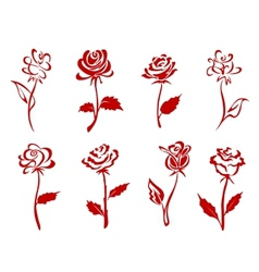 Beautiful red roses vector image vector image