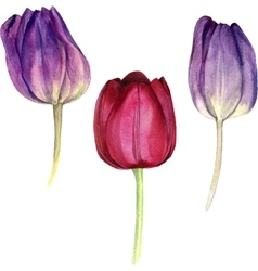Watercolor pink tulip vector