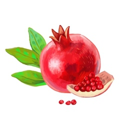Picture of pomegranate vector
