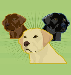 labrador retrievers vector image