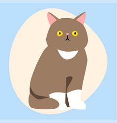 Cat breed cute pet brown fluffy young adorable vector