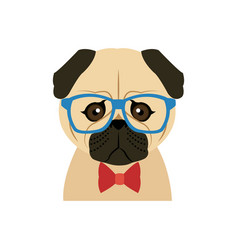Portrait of a pug dog in glasses and a bow tie vector