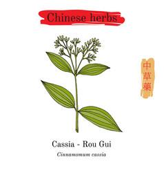 medicinal herbs of china chinese cinnamon vector image