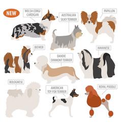 miniature toy dog breeds set icon isolated on vector image