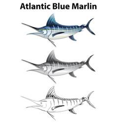 Three drawing styles of atlantic blue marlin vector