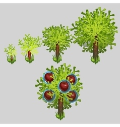 Growth stages of Apple tree with red fruit vector image