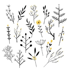 Plants Flowers and Branches vector image