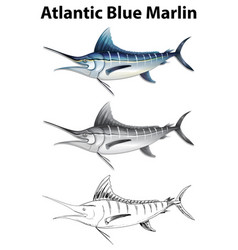 three drawing styles of atlantic blue marlin vector image vector image