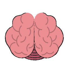 Medical human brain vector