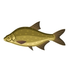 Common bream freshwater bronze carp breamfish vector