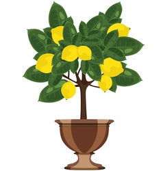 lemon tree in a flowerpot vector image vector image