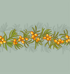 sea buckthorn pattern vector image vector image
